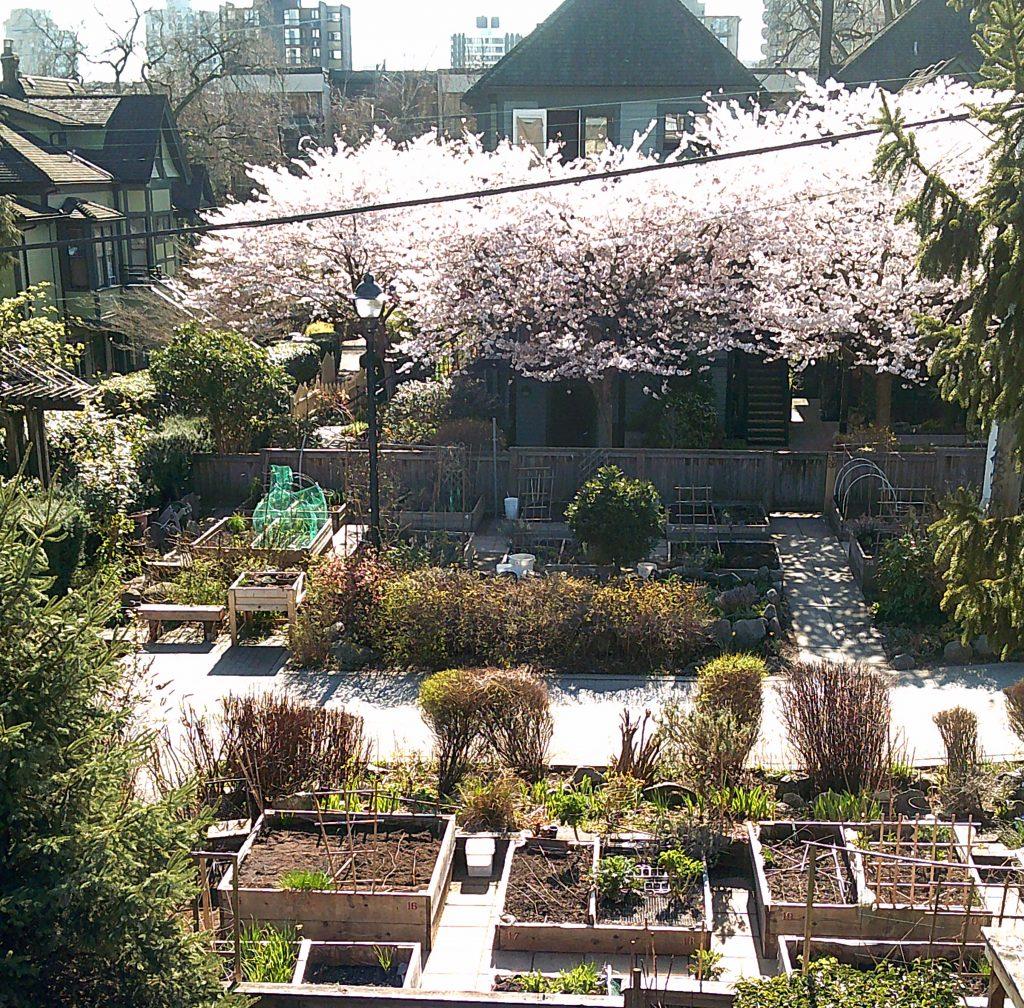 Mole Hill Community Gardens 2019